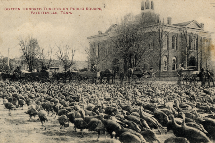 photo of turkeys in Fayetteville's Public Square circa 1910